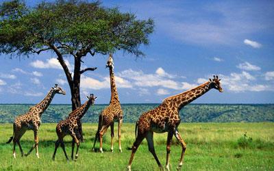 Tanzania Luxury Travel Tours