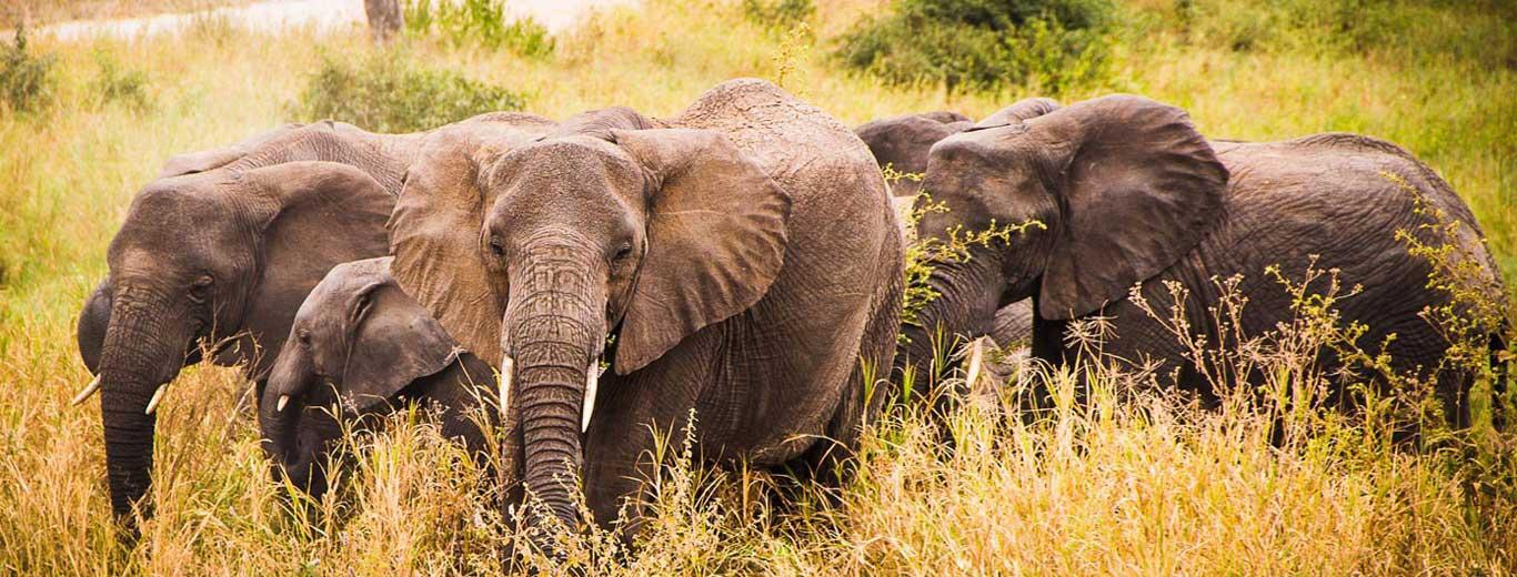 Karibu Africa Safari