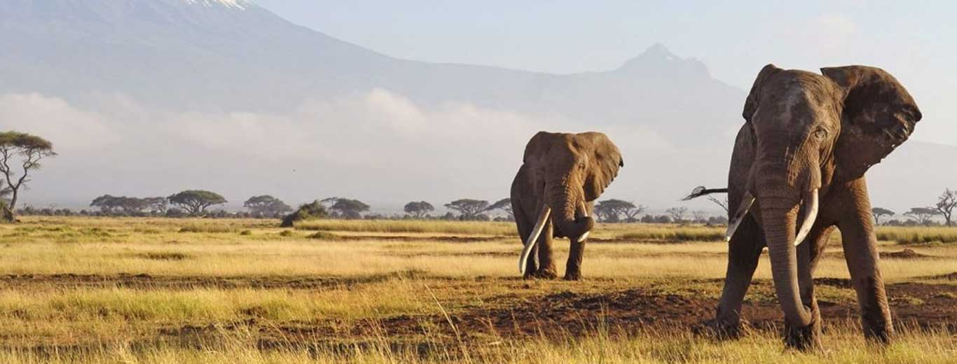 Karibu Tanzania Safari