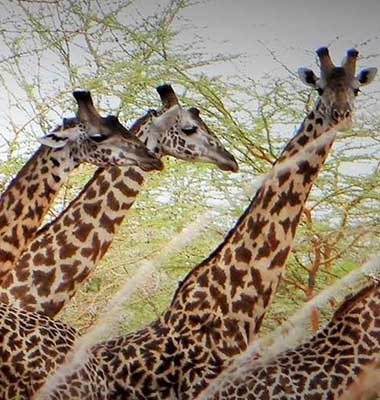 Mkomazi National Park