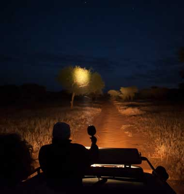 Tanzania Night Game Drive safari