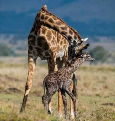 Tanzania Highlights Safari