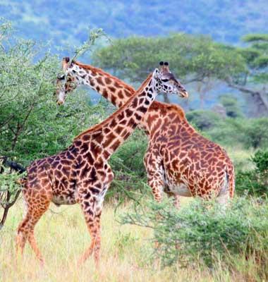 Northern Tanzania And Zanzibar Tour