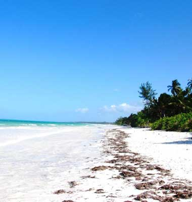 Tanzania Safari & Romantic Zanzibar Beach Tour