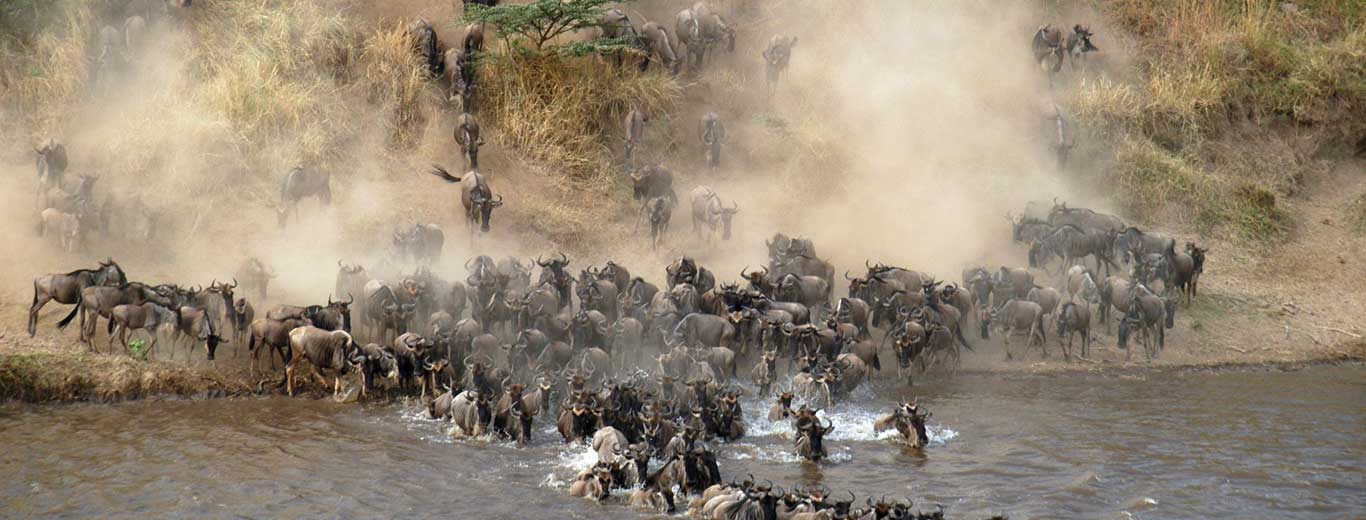 Serengeti River Crossing Migration