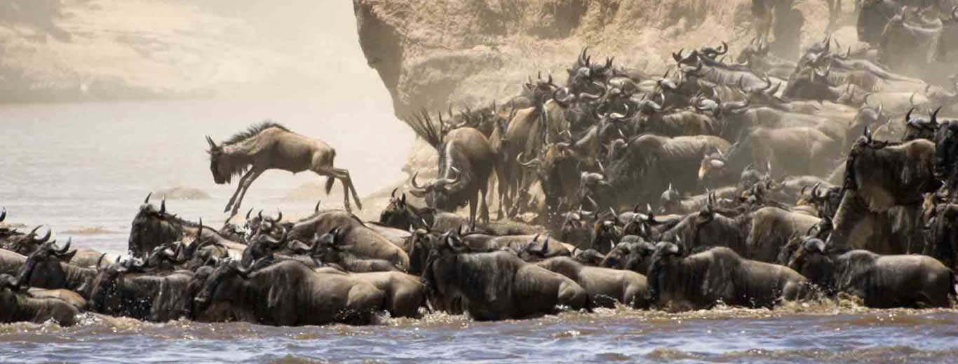 Serengeti River Migration