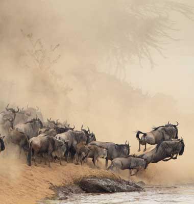 Serengeti River Migration