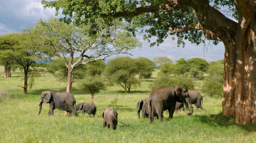 group of Lions On Planning For A Tanzania Tours