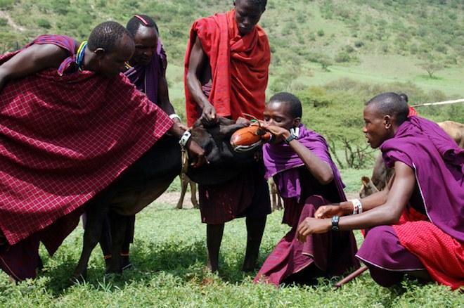Maasai Diet