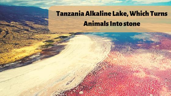 Tanzania Alkaline Lake