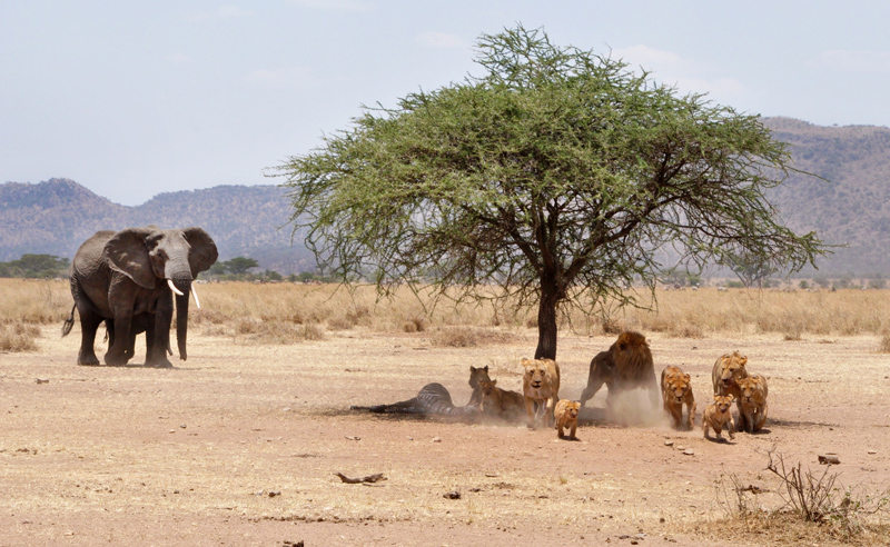 tanzania_safari_wildlife
